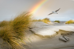 strand-van-Terschelling