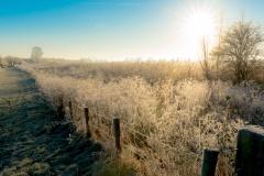 uiterwaarden-winter